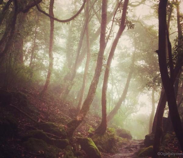 Тропический лес в Гималаях на треке АВС